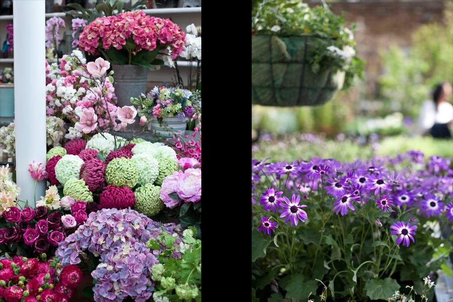 Clifton Nurseries - Flower arrangements & violets