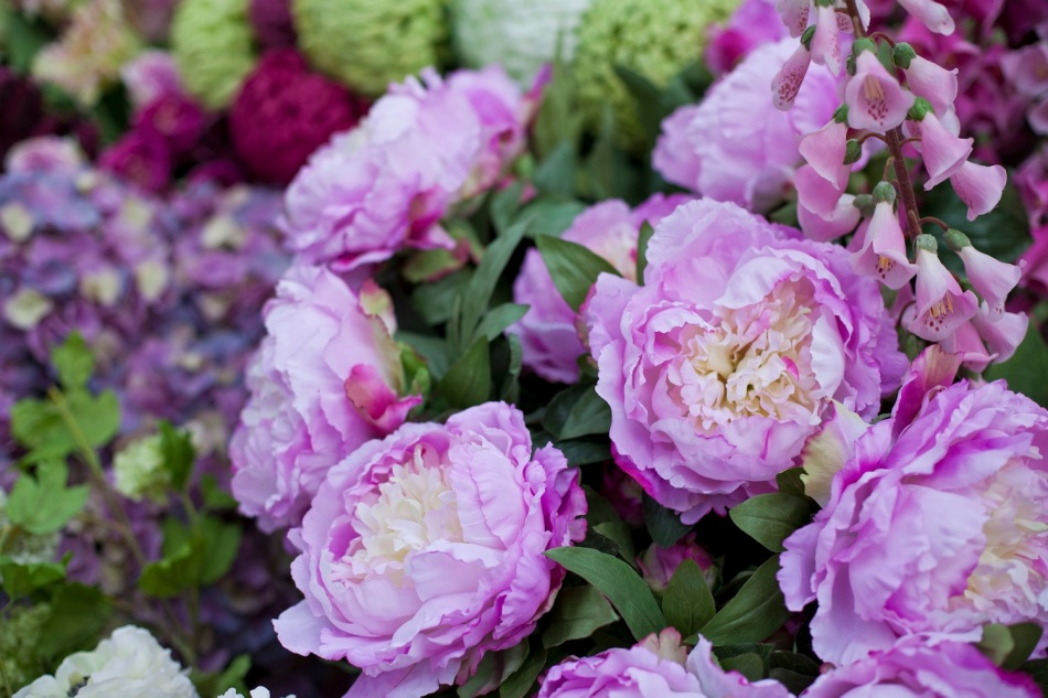 Clifton Nurseries - Peonies
