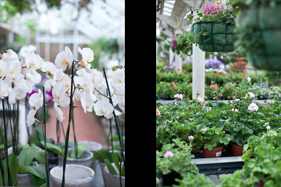 Clifton Nurseries - orchids & other plants